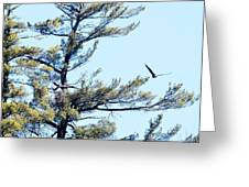 Eagle Nest Greeting Card