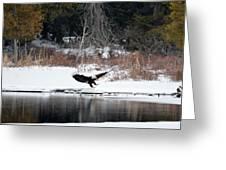 Eagle On The Shoreline Greeting Card