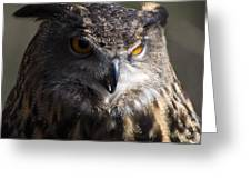 Eagle Owl 2 Greeting Card