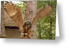 Eagle Owl Makes The Leap Greeting Card