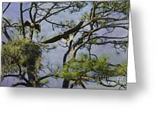 Eagle Pair And Nest Greeting Card