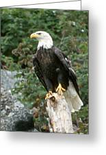 Eagle Perched Atop Stump Greeting Card