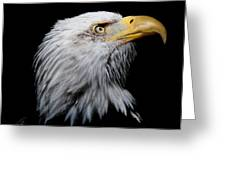 Eagle Portrait II Greeting Card