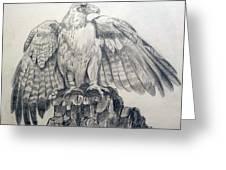 Eagle Sketch Greeting Card