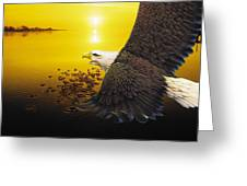 Eagle Sunset Greeting Card