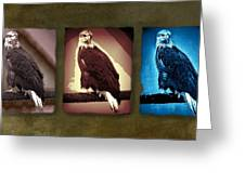 Eagle Triad Greeting Card