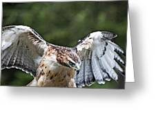 Eagle Wings Greeting Card