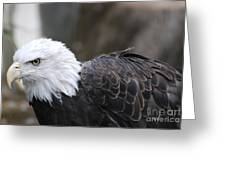 Eagle With Ruffled Feathers Greeting Card