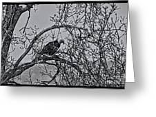 Eagles Along The Mississippi 2 Greeting Card