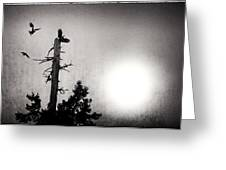 Eagles And Old Tree In Sunset Silhouette Greeting Card
