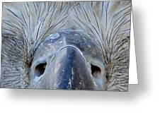 Eagle's Eyes Greeting Card