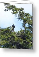 Eagles Nest Greeting Card