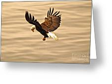 Eagles Pause Greeting Card