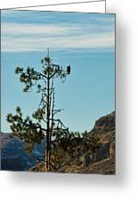 Eagle's View Greeting Card