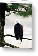 Eagles View  Greeting Card