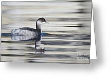 Eared Grebe Greeting Card