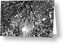 Early Autumn Monochrome Greeting Card