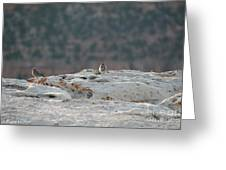 Early Birds On The Edge Greeting Card