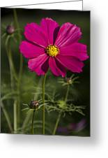 Early Dawns Light On Fall Flowers V 03 Greeting Card
