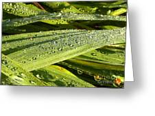 Early Dew Greeting Card