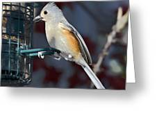 Early Evening Snack Greeting Card