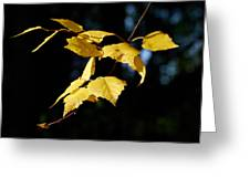 Early Fall Of  Downy Birch Greeting Card