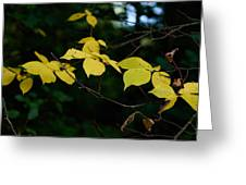 Early Fall Of Wych Elm Greeting Card