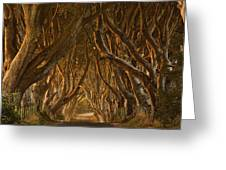 Early Morning Dark Hedges Greeting Card