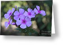 Early Morning Floral Beauty  Greeting Card