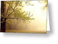 Early Morning Fog Greeting Card