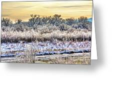 Early Morning Frost Greeting Card