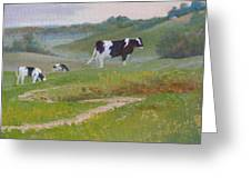 Early Morning Holsteins Greeting Card