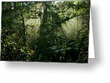 Early Morning Light In The Rain Forest Greeting Card