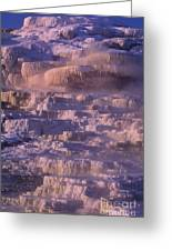 Early Morning Light On Minerva Springs Yellowstone National Park Greeting Card