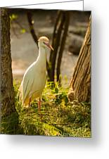 Early Morning Light On The Bird Greeting Card