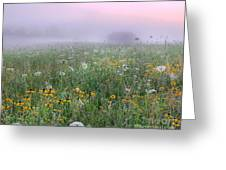 Early Morning Meadow Greeting Card