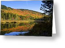 Early Morning On Greenough Pond  Greeting Card