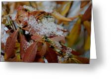 Early Snow On Rhododendron Greeting Card