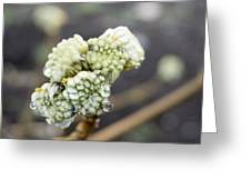 Early Spring 2 Greeting Card