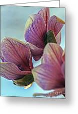 Early Spring Beauty Greeting Card