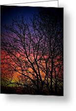 Early Spring Dusk  Greeting Card