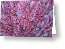 Early Spring Flowering Redbud Tree Greeting Card
