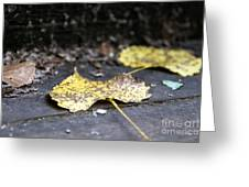 Early Start To Autumn Greeting Card