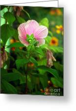 Early Summer Bloom Greeting Card