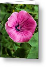 Early Summer Blooms Impressions - Bright Pink Malva - Vertical View Greeting Card