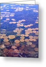 Earth Circles Greeting Card