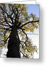 Earth Day Special - Ancient Tree Greeting Card