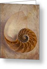 Earthy Nautilus Shell  Greeting Card