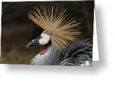 East African Crowned Crane 2 Painterly Greeting Card