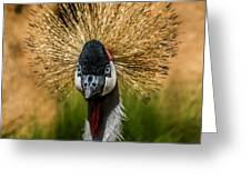 East African Crowned Crane Square Format Greeting Card